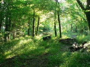 coed hills 4